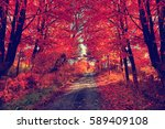 Autumn Scene With Road. Road I...