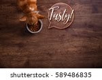 chihuahua dog eat feed. bowl of ... | Shutterstock . vector #589486835