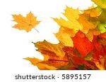 autumn fall leaves | Shutterstock . vector #5895157