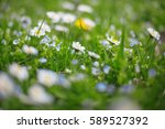 Small photo of greenery spring flowers background, blooming forest glade, spring grass and riotous blossoming, defocused blur, abstract bokeh