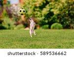 Funny Dog Jumping At Colorful...