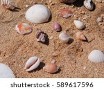Shells On The Sand.