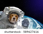 portrait of a dog astronaut in... | Shutterstock . vector #589627616