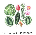 set of tropical flowers and... | Shutterstock . vector #589628828