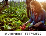 friendly team harvesting fresh... | Shutterstock . vector #589743512