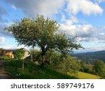 Klar Apple Tree In Carinthia ...