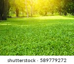 green grass with thee in park | Shutterstock . vector #589779272