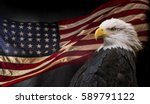 american bald eagle   symbol of ... | Shutterstock . vector #589791122