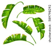 set of banana palm leaves.... | Shutterstock .eps vector #589798292