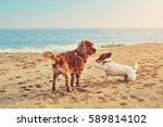 dog breed cocker spaniel and...   Shutterstock . vector #589814102
