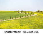 Country Road With Cypresses An...