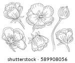 marsh marigold cowslip  king...   Shutterstock .eps vector #589908056