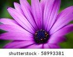 Beautiful 'purple Fanfare'...