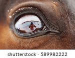 Eye Of A Brown Horse And Human...