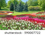 Field Of Tulips With Many...