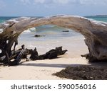 Driftwood On The Beach In Mexico