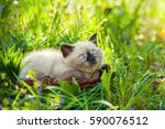 Stock photo little kitten lying in a grass 590076512
