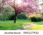 Pink Flowering Tree Over Natur...