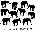 silhouette elephant on white... | Shutterstock . vector #590329172