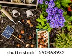 spring planting bulbs of... | Shutterstock . vector #590368982