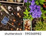 Spring Planting Bulbs Of...
