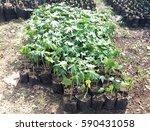 Nursery Seedlings In Sunny Day