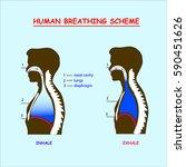 dark human breathing scheme... | Shutterstock .eps vector #590451626