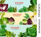 salads and leaf vegetables... | Shutterstock .eps vector #590492672