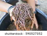 Earthworm Farm   Using...