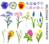 set of spring flowers  viola ... | Shutterstock .eps vector #590532788