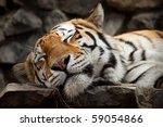 Sleeping Tiger Face Portrait