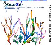 watercolor set with seaweed and ... | Shutterstock . vector #590557916
