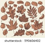 Tree Leaf. Design Set. Hand...