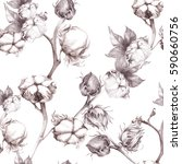 cotton   stalk plants with seed ... | Shutterstock . vector #590660756