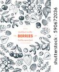 berries hand drawn vector... | Shutterstock .eps vector #590672036