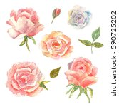 floral set. collection with... | Shutterstock . vector #590725202