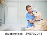 Stock photo young female veterinarian in blue uniform hugging and talking to white fluffy labrador lying on 590732045