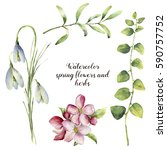 Watercolor Spring Flowers And...
