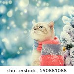 Stock photo portrait of a cat wearing scarf outdoor in snowy winter near fir tree 590881088