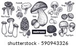 mushrooms big set. bolete ... | Shutterstock .eps vector #590943326
