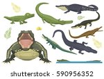 cartoon green crocodile danger... | Shutterstock .eps vector #590956352