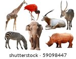 wild animal collection isolated ... | Shutterstock . vector #59098447