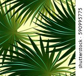 tropical cabbage palm tree... | Shutterstock . vector #590995775