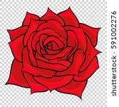 flower rose. isolated on... | Shutterstock .eps vector #591002276