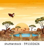 scene with meerkats and other... | Shutterstock .eps vector #591102626