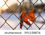 Leaf Stuck In A Fence