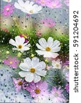 Cosmos Flowers And Rain