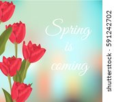 spring text with red tulips... | Shutterstock .eps vector #591242702