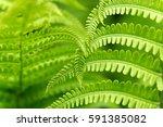 Foliage Plants Fern Grows In...