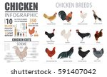 poultry farming infographic... | Shutterstock .eps vector #591407042